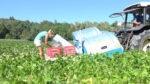 Fontana S.r.l. Green Beans Harvesting Machine_1118 copy