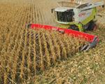 Narrow-Row Corn Harvest
